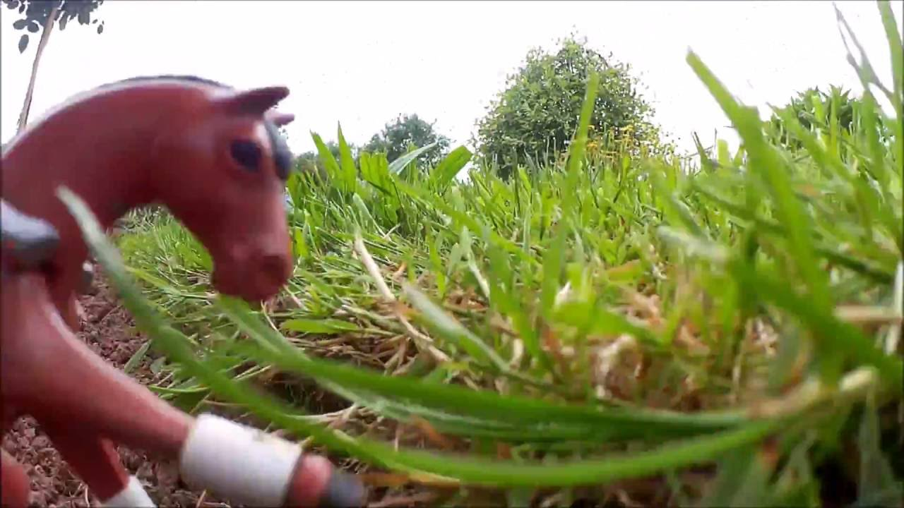 Playmobil chevaux film